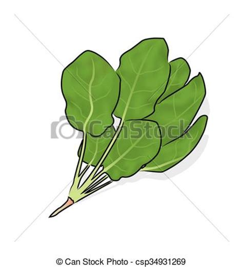 Real spinach clipart   Clipground
