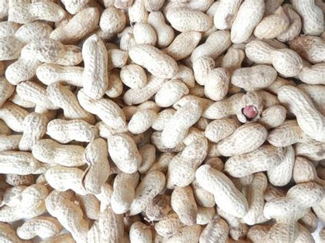 cheap peanuts for birds free delivery kennedy wild bird