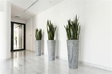 geen groene vingers deze  kamerplanten zijn