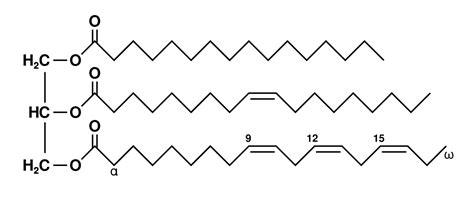 triglyceride molecule diagram triglyceride