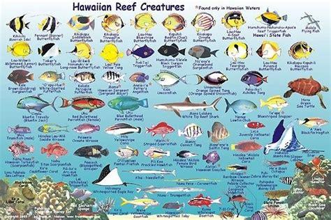 the ultimate guide to hawaiian reef fishes sea turtles maui fish franko s molokai creatures guide maui hawaii