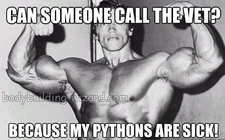 Funny Bodybuilding Memes - bodybuilding humor bodybuilding wizard