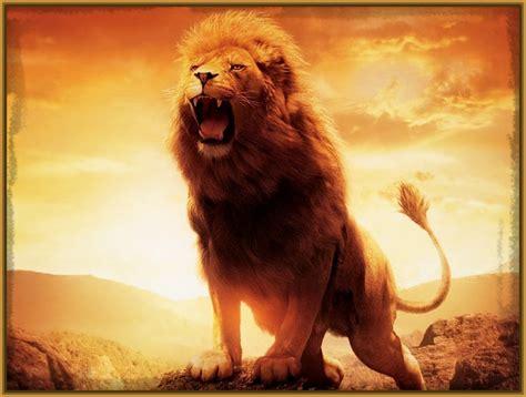 imagenes de leones las mejores las mejores fotos de leones archivos imagenes de leones