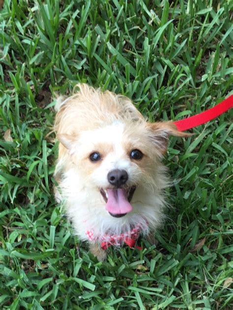 puppy adoption florida florida rescue adoption pending