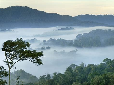 best photo of 2014 nyungwe forest national park rwanda national geographic