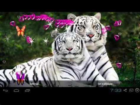 bengal tiger  wallpapers apps  google play