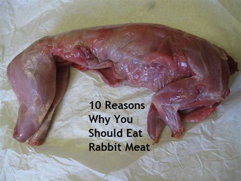 Backyard Rabbitry 10 Reasons Why You Should Eat Rabbit Meat