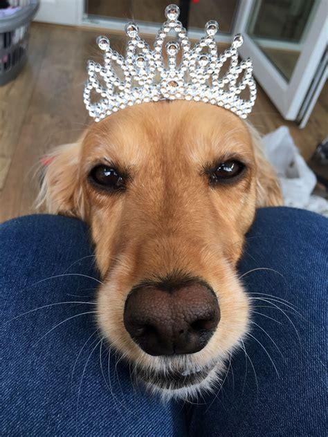 princess puppy puppy bandana princess puppy bandana