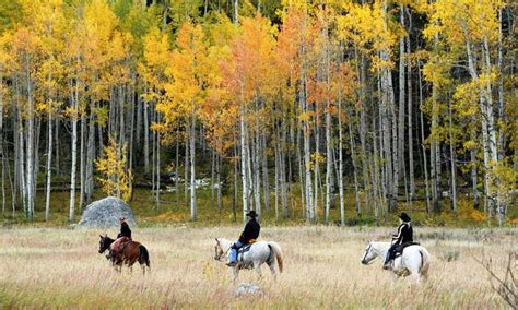 steamboat horse steamboat springs horseback riding horse trail rides