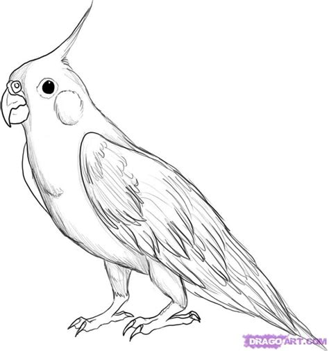 Cockatiel Coloring Pages cockatiel coloring pages picture image by tag keywordpictures