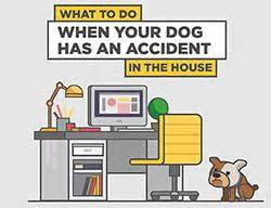 dog accidents in the house what to do when your dog has an accident in the house chem dry