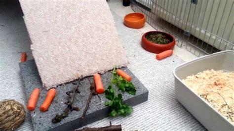 grundreinigung wohnung kaninchen gehege grundreinigung teil 2
