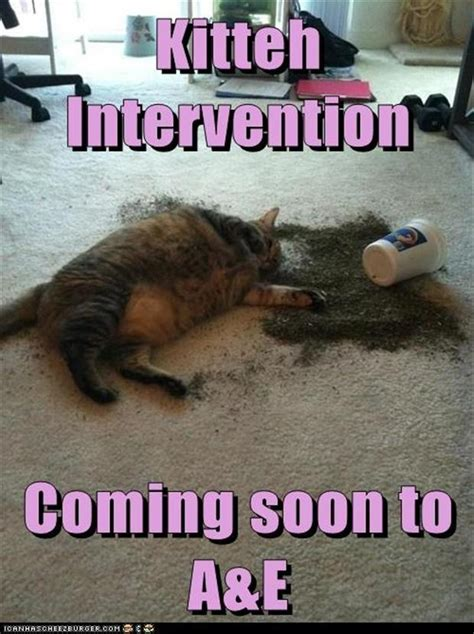Intervention Meme - kitten intervention funny cat nip pictures dump a day