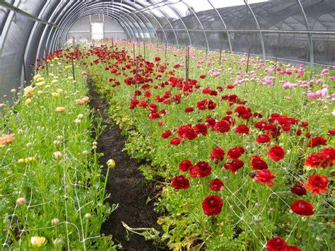 grow le contact lemera gardens talent oregon le mera gardens