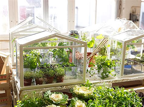 ikea indoor garden ikea s miniature greenhouse lets anyone create their own indoor garden inhabitat green