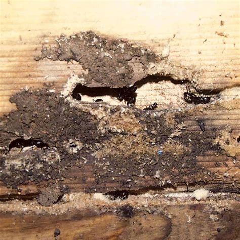 ant problem in bathroom ant problem in bathroom 28 images have an ant problem love my house rat control perth small