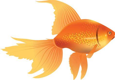 gold fish clip best goldfish clipart 10483 clipartion