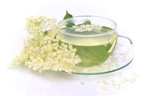 fiori di sambuco tisana contro il caldo il fiore di sambuco medicinalive