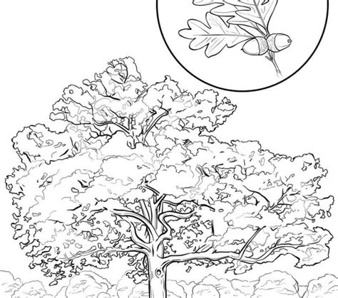 texas state symbols coloring pages kids coloring