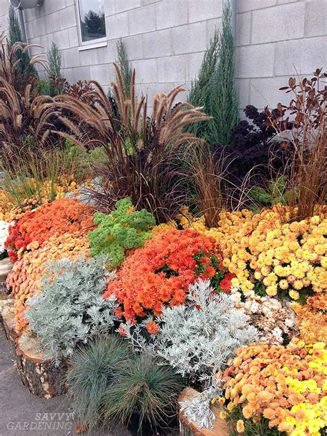 fall garden mums a medley of mums and fall garden inspiration