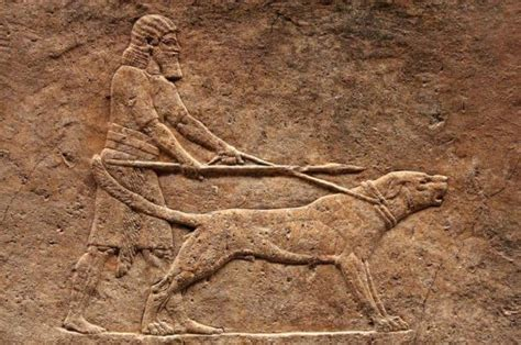 ancient dogs 17 oldest breed in the world inside