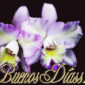imagenes animadas de buenos dias para bb pin im 225 genes de buenos dias bonitas y animadas para blackberry