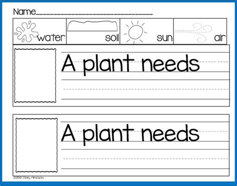 kindergarten activities on plants 396 best plants unit images on pinterest gardening