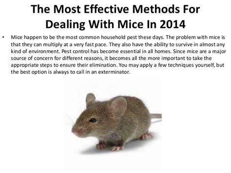 what are the most effective the most effective methods for dealing with mice in 2014