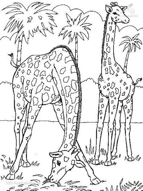 wild animals coloring pages preschool drachen und andere fabelwesen bilder tattoos geschichten