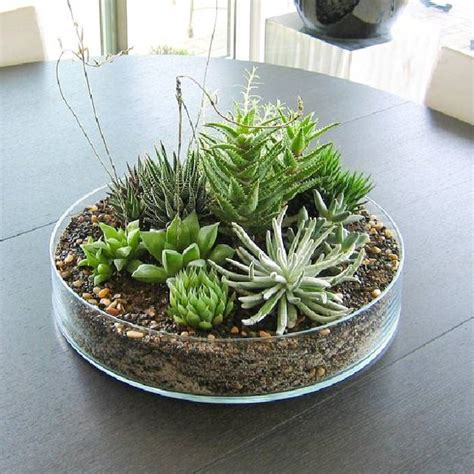 Indoor Succulent Planter by Everyday Dining Room Table Centerpiece Ideas Indoor