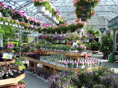 Greenhouse Garden Center by Annual Greenhouse At W W Nursery Apalachin Ny W W