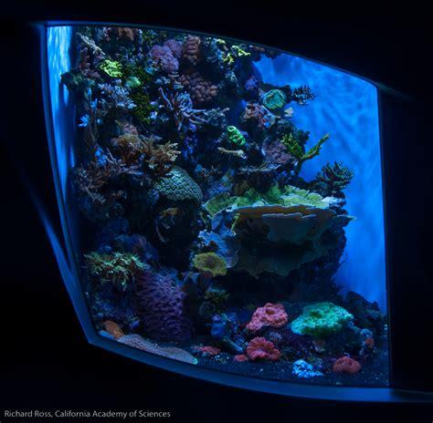 Reef Aquascaping Reef Aquarium Rock Wall Aquascapes Can Be Interesting