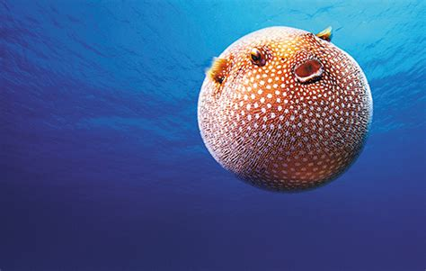 New Home Essentials Ripley S Aquarium Is Toronto S Wettest New Attraction