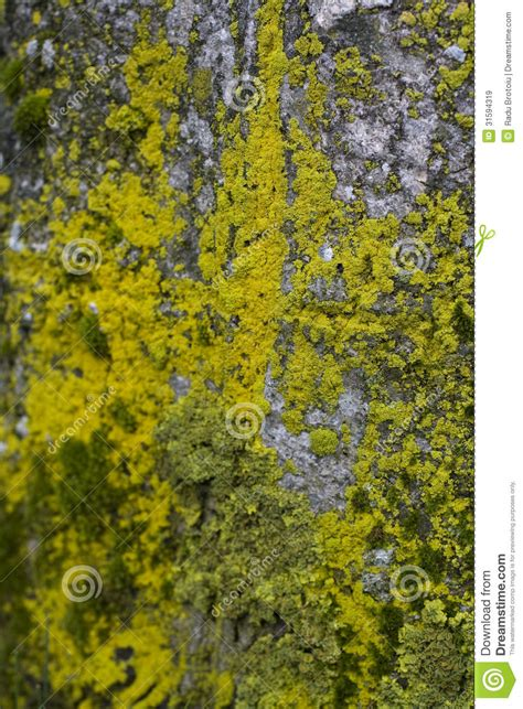 colors close to yellow moss tree colors royalty free stock images image 31594319