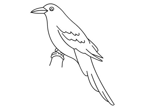 crow bird coloring page animals birds and insects coloring pages part 2