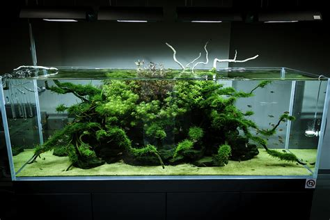 aquascaping ada ada gallery via viktorlantos flickr aquariums