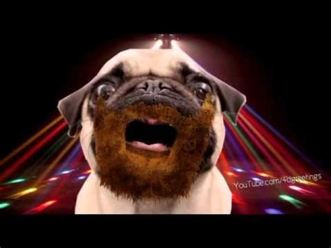 pug singing happy birthday the pug song funnydog tv