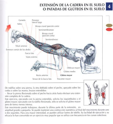 imagenes de ejercicios para workout ejercicios piernas fotos musculaci 243 n y pesas
