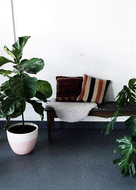 modern houseplants modern house plants modern house