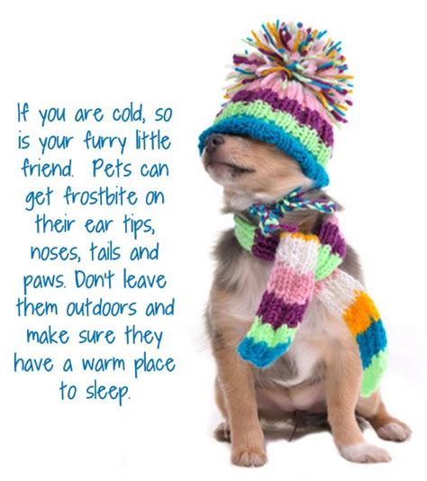 How To Keep Pets by Keep Your Pets Warm Bvns