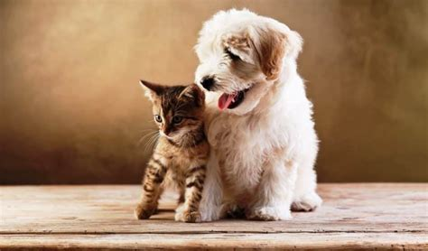 best dogs for cats best breeds for cats cat and live together