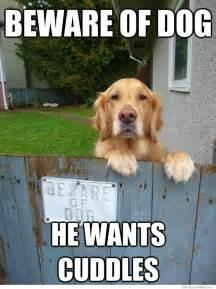 Doggy Meme - trending