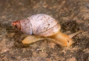 imagenes de animales moluscos ciencias de joseleg introducci 243 n a la excreci 243 n en los