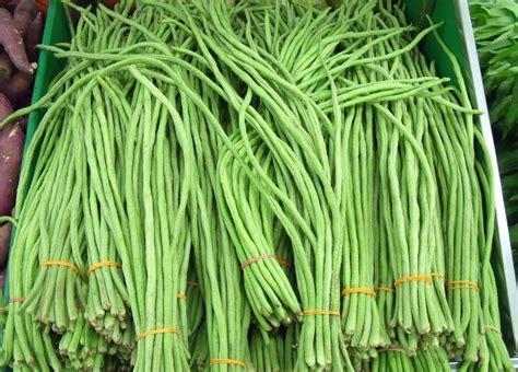 2 Biji Benih Kacang Panjang Biji Hitam cara budidaya kacang panjang yang mudah tanaman hias tanaman hias