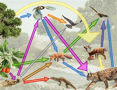 cadenas troficas ejemplos terrestre cadena alimenticia y red tr 243 fica terrestres y acu 225 ticas