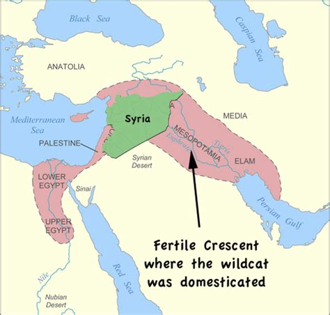 fertile crescent map free coloring pages of fertile cresent