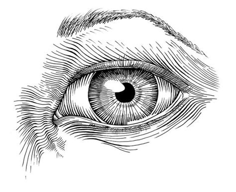 ideas ink pen and ink drawing ideas eye in pen and ink by