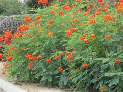 Orange Garden Flowers Guide For Landscape Arizona Backyard Landscaping Pictures 97 Dotcom