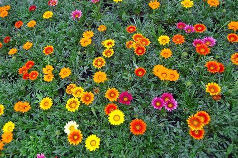 macam bunga macam macam bunga  dunia
