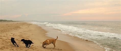beaches that allow dogs the best friendly beaches healthy paws pet insurance